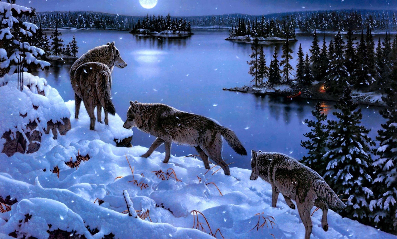 Exceptionnel wolf | Il Mondo Dei Lupi BF49